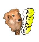 犬トーク!!動物仲間編 写真 吹出し(個別スタンプ:16)