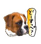 犬トーク!!動物仲間編 写真 吹出し(個別スタンプ:17)