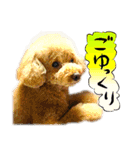 犬トーク!!動物仲間編 写真 吹出し(個別スタンプ:27)