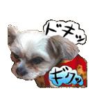 犬トーク!!動物仲間編 写真 吹出し(個別スタンプ:33)