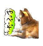 犬トーク!!動物仲間編 写真 吹出し(個別スタンプ:35)