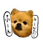 犬トーク!!動物仲間編 写真 吹出し(個別スタンプ:36)