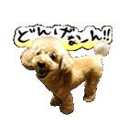 犬トーク!!動物仲間編 写真 吹出し(個別スタンプ:38)