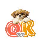 【実写】シーズー犬ぽんずとかぼす(個別スタンプ:02)