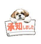 【実写】シーズー犬ぽんずとかぼす(個別スタンプ:03)