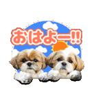 【実写】シーズー犬ぽんずとかぼす(個別スタンプ:06)