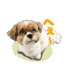 【実写】シーズー犬ぽんずとかぼす(個別スタンプ:22)
