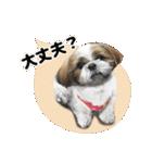 【実写】シーズー犬ぽんずとかぼす(個別スタンプ:31)
