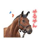 大阪弁をしゃべる馬のスタンプ(個別スタンプ:01)