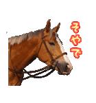 大阪弁をしゃべる馬のスタンプ(個別スタンプ:11)
