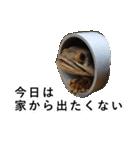 リアル熱帯魚スタンプコレクション(個別スタンプ:1)