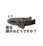 リアル熱帯魚スタンプコレクション(個別スタンプ:2)