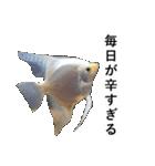 リアル熱帯魚スタンプコレクション(個別スタンプ:5)
