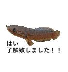リアル熱帯魚スタンプコレクション(個別スタンプ:6)