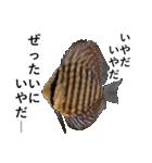リアル熱帯魚スタンプコレクション(個別スタンプ:7)