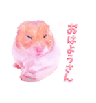 関西弁★幸せのピンクハムスター(個別スタンプ:01)