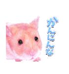 関西弁★幸せのピンクハムスター(個別スタンプ:13)