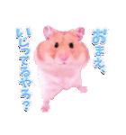 関西弁★幸せのピンクハムスター(個別スタンプ:17)
