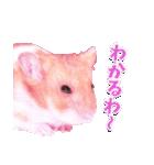 関西弁★幸せのピンクハムスター(個別スタンプ:18)