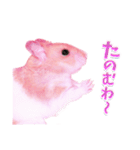 関西弁★幸せのピンクハムスター(個別スタンプ:22)
