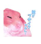 関西弁★幸せのピンクハムスター(個別スタンプ:37)