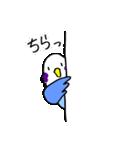 となりのいんこちゃん(個別スタンプ:38)