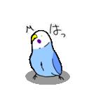 となりのいんこちゃん(個別スタンプ:39)
