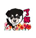 動く!黒柴っち(個別スタンプ:01)