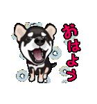 動く!黒柴っち(個別スタンプ:04)