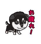 動く!黒柴っち(個別スタンプ:6)