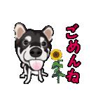 動く!黒柴っち(個別スタンプ:08)