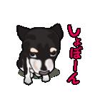 動く!黒柴っち(個別スタンプ:19)
