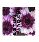 花のスタンプ(個別スタンプ:1)