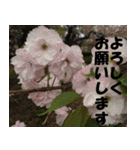 花のスタンプ(個別スタンプ:2)