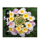花のスタンプ(個別スタンプ:3)