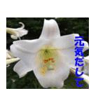 花のスタンプ(個別スタンプ:05)