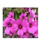 花のスタンプ(個別スタンプ:6)