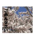 花のスタンプ(個別スタンプ:7)