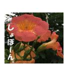 花のスタンプ(個別スタンプ:8)