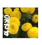 花のスタンプ(個別スタンプ:9)