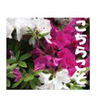 花のスタンプ(個別スタンプ:10)