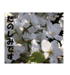 花のスタンプ(個別スタンプ:11)