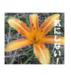 花のスタンプ(個別スタンプ:13)