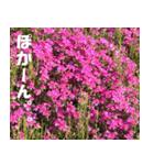 花のスタンプ(個別スタンプ:14)