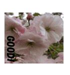 花のスタンプ(個別スタンプ:15)