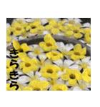 花のスタンプ(個別スタンプ:16)