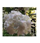 花のスタンプ(個別スタンプ:17)