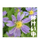 花のスタンプ(個別スタンプ:18)