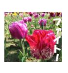 花のスタンプ(個別スタンプ:19)