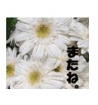 花のスタンプ(個別スタンプ:20)